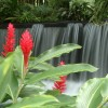 Gorgeous gardens and thermal water from Arenal Volcano