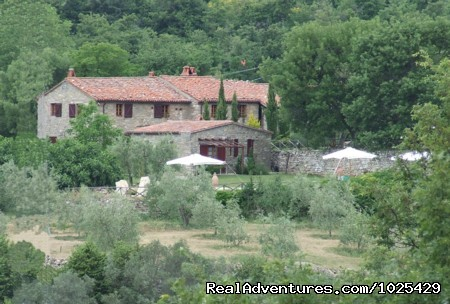 East garden - Stone House Retreat - Antica Fattoria di Pietra