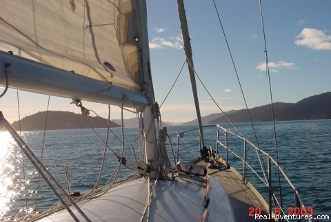 Sailing in the Sounds - The Waterfront Apartments Picton Marina