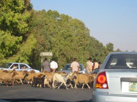Traffic Jam - Jordan Experience Tours
