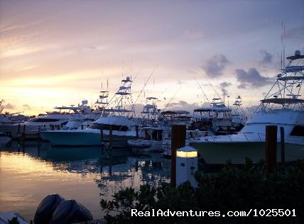 Marina - Old Bahama Bay Resort & Yacht Harbour