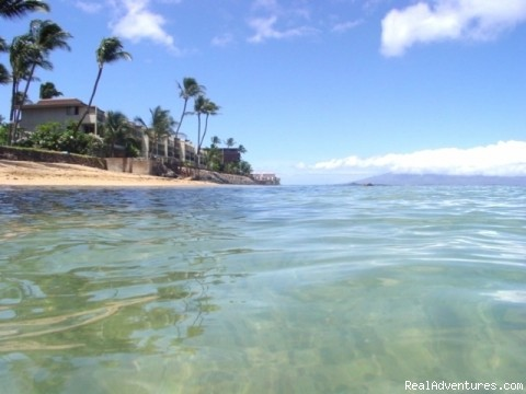 Maui Condo Rental - OCEANFRONT - &Lokelani 2Br&: Lokelani A 205  -  15 Steps to the Ocean