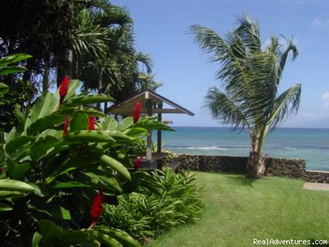- Maui Condo Rental - OCEANFRONT - &Lokelani 2Br&