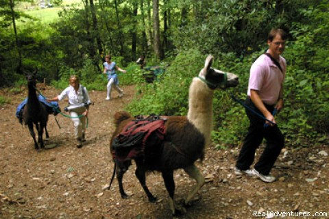 Llama Trek to the Gazebo for Dinner - Great Smoky Mountain Excursion