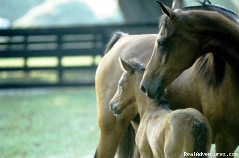 Bluegrass Excursion: Mother and Her Foal