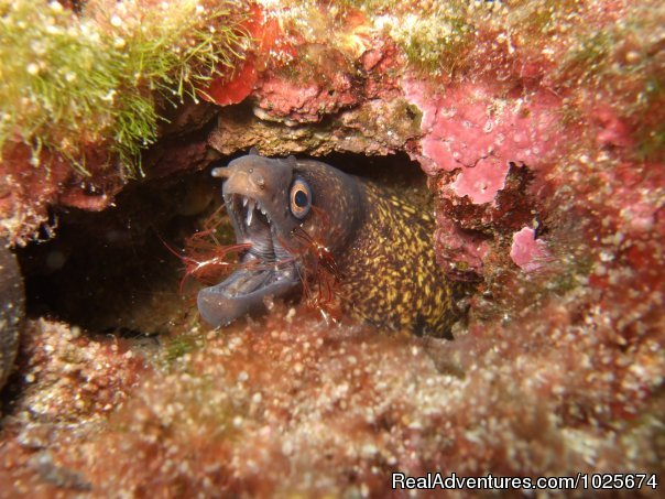 Moray Eel & Cleaner Shrimp - Divewise