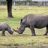 Africa Wildlife Safaris Kenya Tanzania