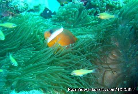 - Scuba Dive at Tiliva Resort in Kadavu Fiji