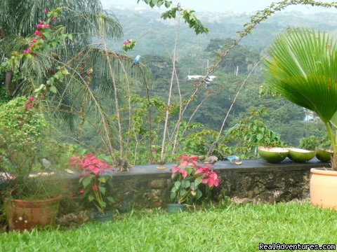 Garden view with birds - Windy Edge, Tobago, retreat on tropical island