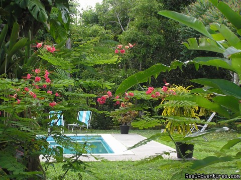 Pool  - Windy Edge, Tobago, retreat on tropical island