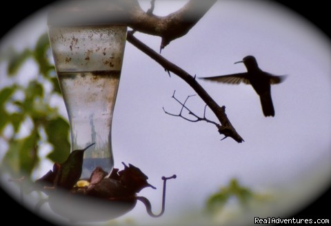 humming birds - Windy Edge, Tobago, retreat on tropical island