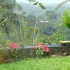 Windy Edge, Tobago, retreat on tropical island Garden view with birds