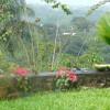 Garden view with birds