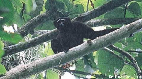 baboon in bangladesh - Travel Bangladesh