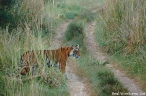 The Ranthambhore Tiger Safari Wildlife & Safari Tours Sawai Madhopur, India