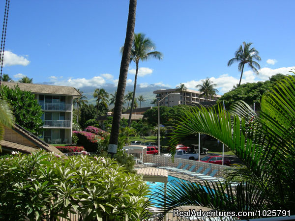 - Maui Condo Rental by Beach from $80nt -Kihei Maui