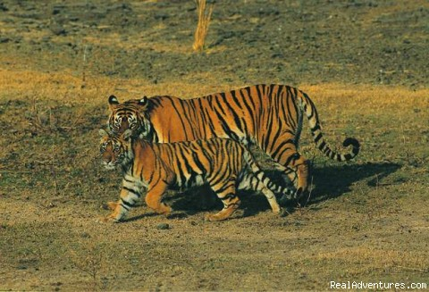 Wildlife Tours And Safaris India