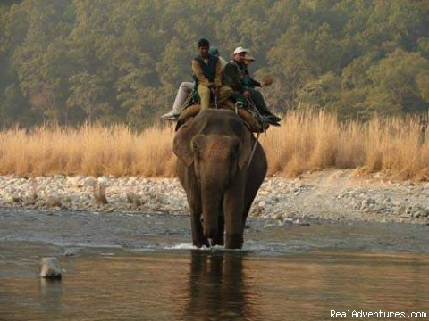 Photo #4 - Wildlife Tours And Safaris India