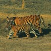 Wildlife Tours And Safaris India Wildlife & Safari Tours India