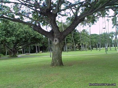 Climb a tree - Aloha Healing & Spiritual Retreats