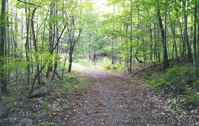 Path to Falls Brook is wide and tranquil - Falls Brook Yurt Rentals in the Adirondacks