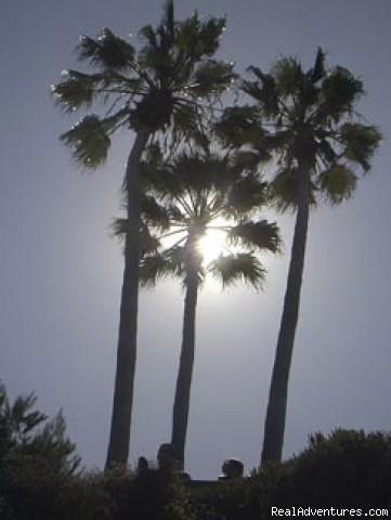 - Bike the La Jolla Freefall