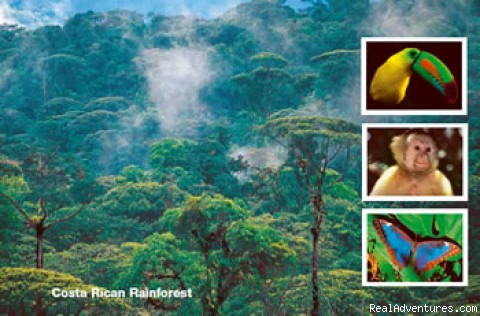 Costa Rica Rainforest - Costa Rica Tour - All Inclusive: Costa Rica, Mexico, USA and Canada