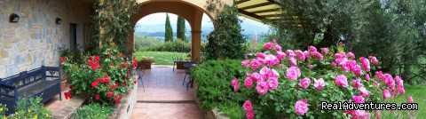 B&B set among olive trees and flowers