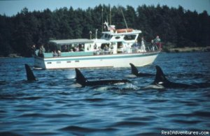 Eco Tours w/ Western Prince Whale & Wildlife Tours Friday Harbor, Washington Whale Watching