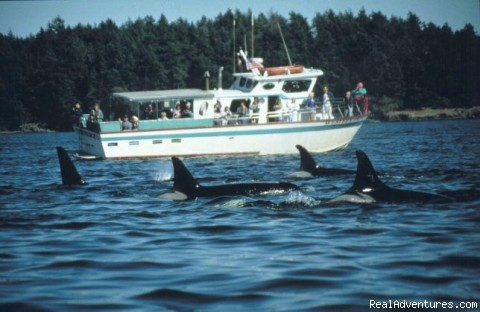 Eco Tours w/ Western Prince Whale & Wildlife Tours Whale Watching Friday Harbor, Washington