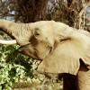Elephant Watch-Africa's unique Elephant Experience