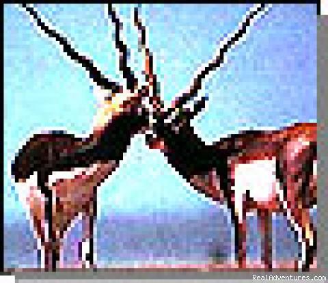 Photo #5 - Wildlife & Nature Tours in India