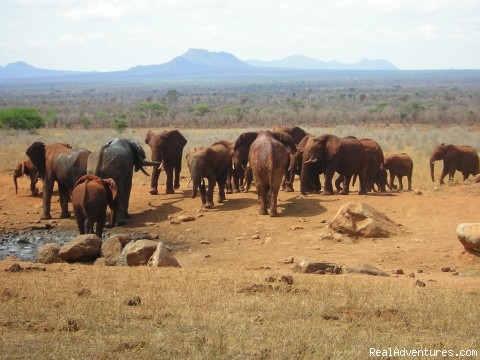 Wildlife Safaris , Study Tours in East Africa