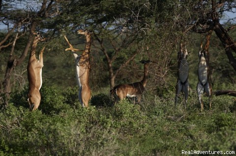 - Wildlife Safaris , Study Tours in East Africa