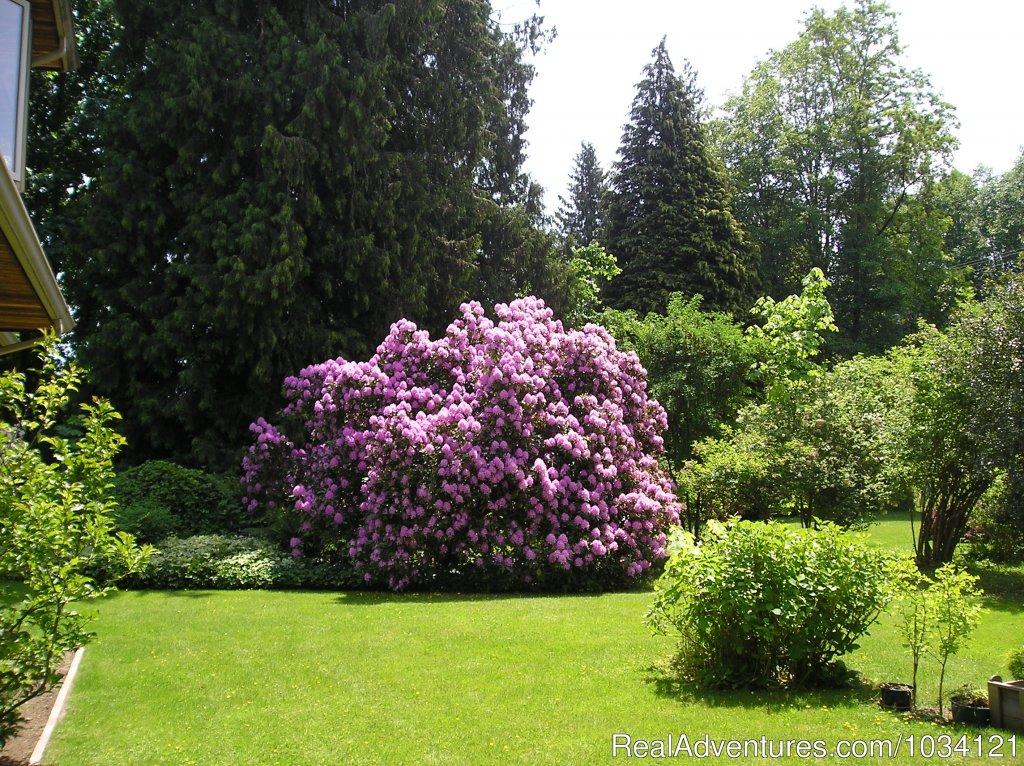 The largest Rhododendron bushes on Vancouver Island | Image #23/26 | Cedar Wood Lodge Bed & Breakfast Inn