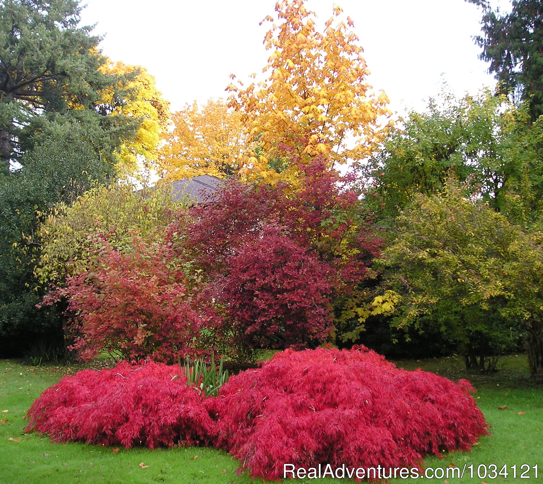 Colorful fall changes to the foliage in the gardens. | Image #22/26 | Cedar Wood Lodge Bed & Breakfast Inn
