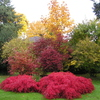 Colorful fall changes to the foliage in the gardens.