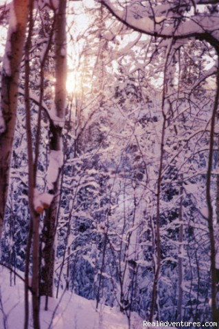 Winter wonderland - Honeymoon or Adventure at Yukon Forest Cabins B&B