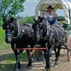 Family Adventure on Genuine Covered Wagon Train Jamestown, North Dakota Sight-Seeing Tours