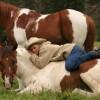 A boy & his horse
