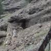 Petrified Tree _ YNP