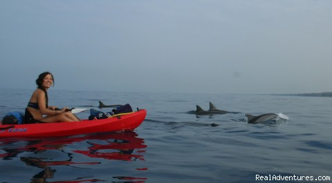 Kayak with Dolphins - Kayak and Snorkel eco-adventures in Maui