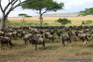 See animals in their real natural habitant Central Highlands, Kenya Wildlife & Safari Tours