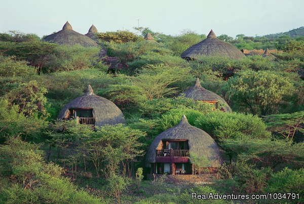 Serengeti Serena - See animals in their real natural habitant