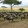 See animals in their real natural habitant Wildlife & Safari Tours Kenya