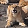 RA Safaris Tanzania Arusha, Tanzania Wildlife & Safari Tours