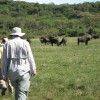 Walking in Arusha National Park