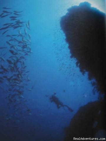 Dive Bali - PADI Scuba Dive Resort Bali Indonesia Tulamben