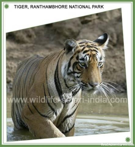 Wildlife Safari and Tours in India: Wildlife Safari and  Tours in India
