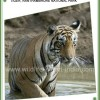 Wildlife Safari and Tours in India Sight-Seeing Tours New Delhi, India
